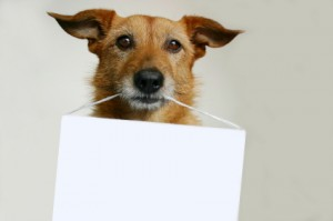 istock_000000868819xsmall-dog-holding-sign